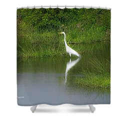 Great Egret By The Waters Edge Shower Curtain
