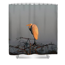 The Great Egret  Shower Curtain by David Lee Thompson