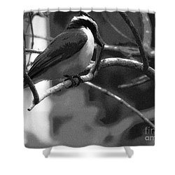 The Great Kiskadee  Shower Curtain