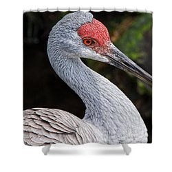 The Greater Sandhill Crane Shower Curtain by Christopher Holmes