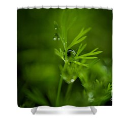 The Green Drop Shower Curtain