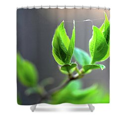 The Green Leaf Shower Curtain