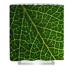 Shower Curtain featuring the photograph The Green Network by Ana V Ramirez