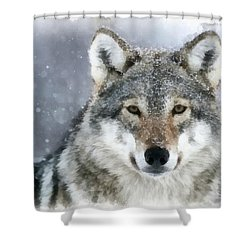 The Grey Wolf Shower Curtain
