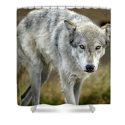 The Grey Wolf Shake Shower Curtain