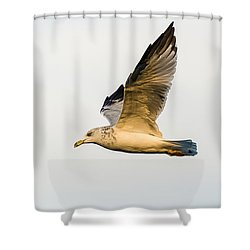 Shower Curtain featuring the photograph The Gull In Flight by Yeates Photography