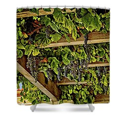 The Hanging Grapes Shower Curtain