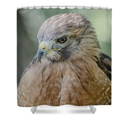 The Hawk Shower Curtain by David Collins