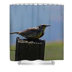 The Hawk Squat Shower Curtain
