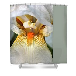 Shower Curtain featuring the photograph The Heart Of A Bearded Iris by Sheila Brown
