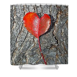 The Heart Of A Tree Shower Curtain by Debra Thompson