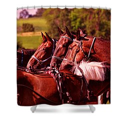 The Herd Shower Curtain