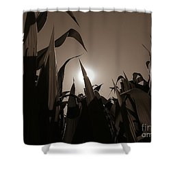 The Hiding Sun - Sepia Shower Curtain