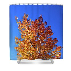 Shower Curtain featuring the photograph The Hillside - Panorama by Shane Bechler