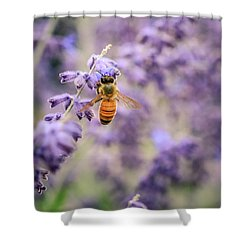 The Honey Bee And The Lavender Shower Curtain