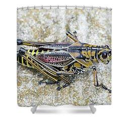 The Hopper Grasshopper Art Shower Curtain by Reid Callaway