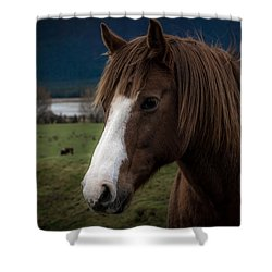 The Horse Shower Curtain by Andrew Matwijec