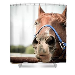 Shower Curtain featuring the photograph The Horse's Mouth by Kelly Hazel