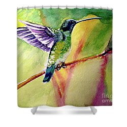 The Hummingbird Shower Curtain