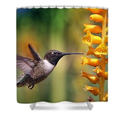 The Hummingbird And The Bee Shower Curtain