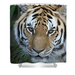 Shower Curtain featuring the photograph The Hunter by Laddie Halupa