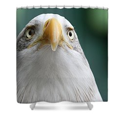 Shower Curtain featuring the photograph The Hunters Stare by Laddie Halupa