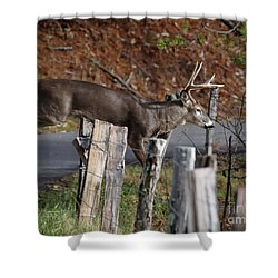 Shower Curtain featuring the photograph The Jumper 2 by Douglas Stucky