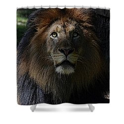 The King In Awe Shower Curtain by Ronda Ryan