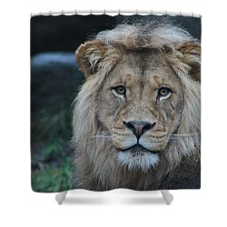 Shower Curtain featuring the photograph The King by Laddie Halupa