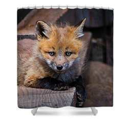 The Kit Shower Curtain by John De Bord