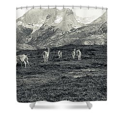 The Lamas Shower Curtain by Andrew Matwijec