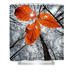 The Last Leaf Of November Shower Curtain