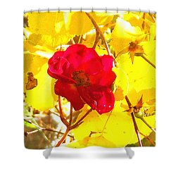 The Last Rose Of Autumn Shower Curtain