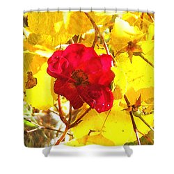 The Last Rose Of Autumn II Shower Curtain