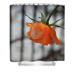 Shower Curtain featuring the photograph The Last Rose Of Summer by Jeanette French