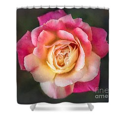 The Last Rose Of Summer, Painting Shower Curtain