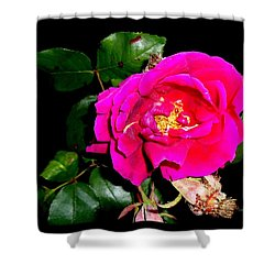 The Last Rose - Of Summer Shower Curtain