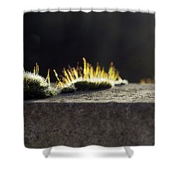 The Last Sun Of December Shower Curtain
