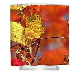 The Last Yellow Leaves Shower Curtain