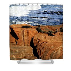 The Lazy Lounging Seals Shower Curtain