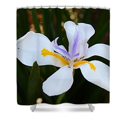 The Legacy African Iris Shower Curtain by Warren Thompson