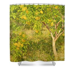The Lemon Tree Shower Curtain by Henry Scott Tuke
