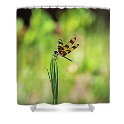 Shower Curtain featuring the photograph The Liberation by Michiale Schneider