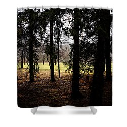 The Light After The Woods Shower Curtain