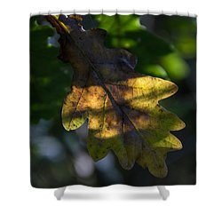 Shower Curtain featuring the photograph The Light Fell Softly by Odd Jeppesen