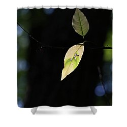 The Light Shines Through Shower Curtain by Mary Bedy