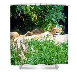 The Lion Awakes Shower Curtain