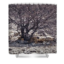 Shower Curtain featuring the photograph The Lion Family by Ernie Echols