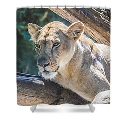 The Lioness Shower Curtain by David Collins