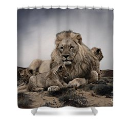 Shower Curtain featuring the photograph The Lions by Christine Sponchia